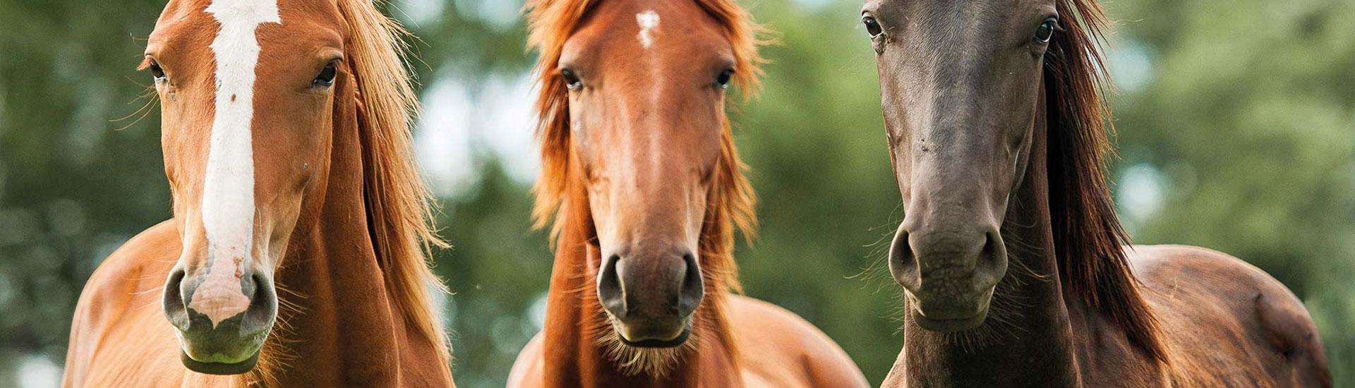 Pferdefutter von Galopp