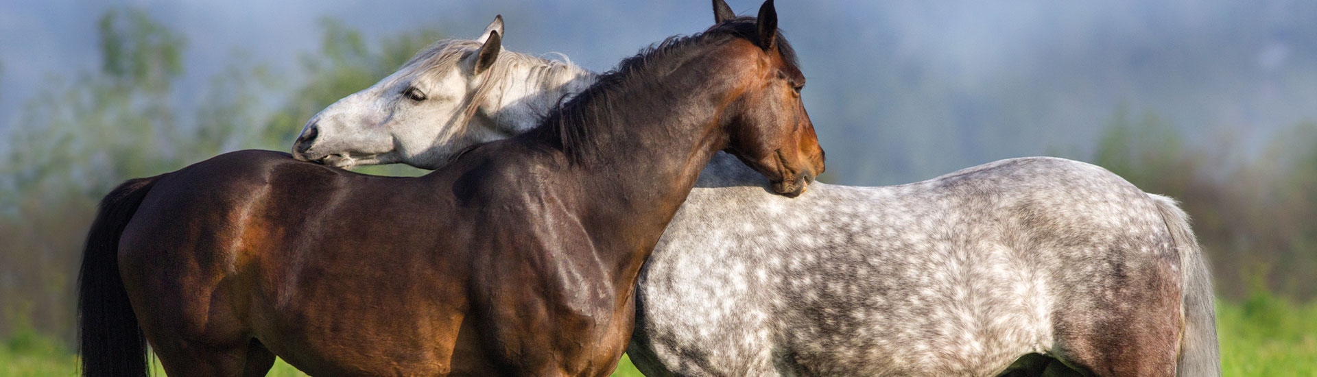 Pferdefutter Basis Produkte