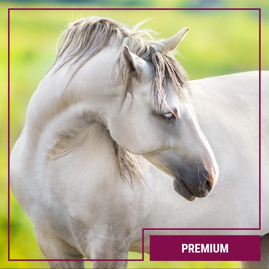 Galopp Premium Pferdefutter