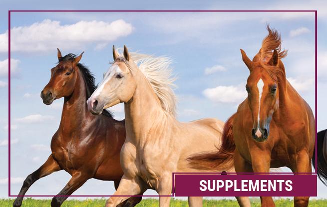 Ergänzungsfutter für Pferde von Galopp