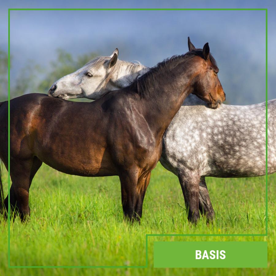 Galopp Basis Pferdefutter