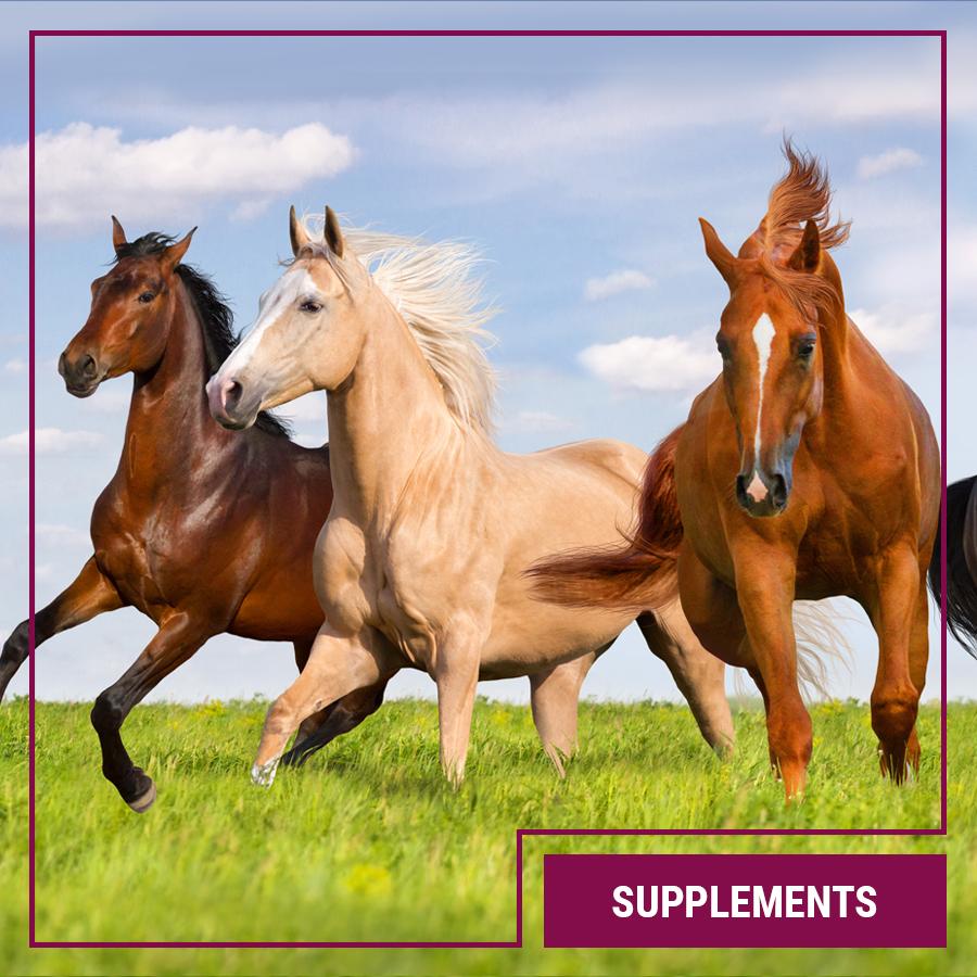 Galopp Supplements