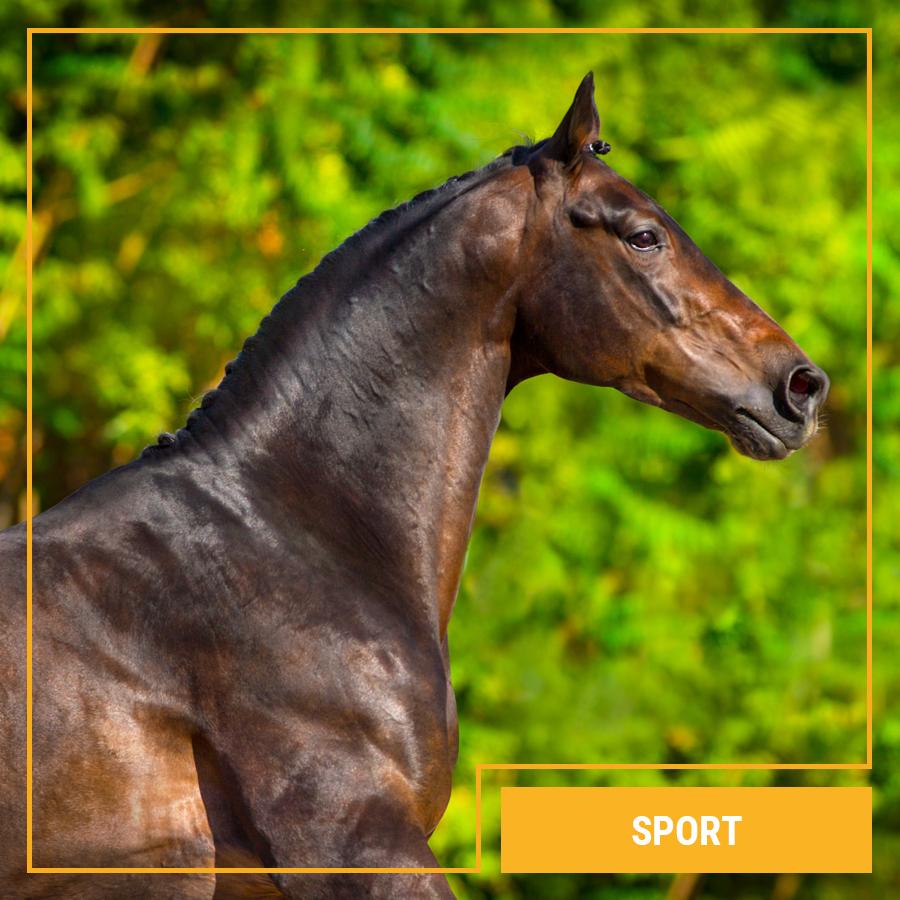 Galopp Sport Pferdefutter