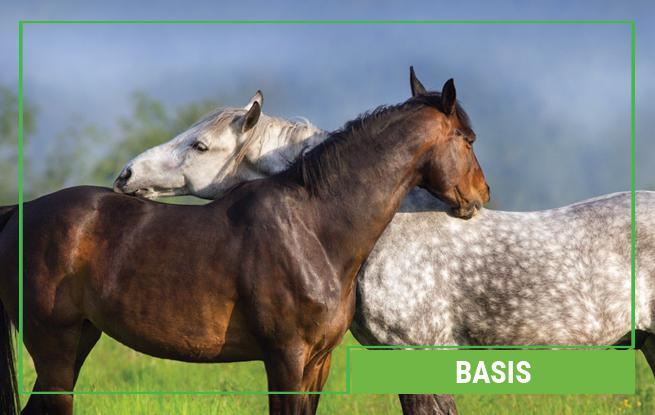 Basis Pferdefutter von Galopp