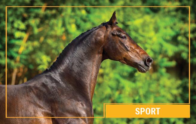 Sport Pferdefutter von Galopp